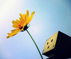 flower, dambo, and sun image