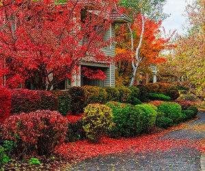 autumn, nature, and flowers image