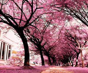 autumn, pink, and tree image