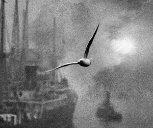photography and seagull image