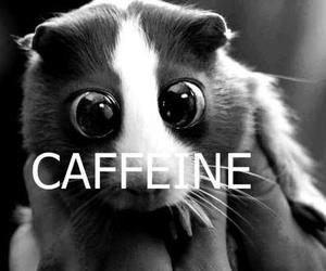 caffeine and black and white image
