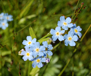 blue, finland, and flower image