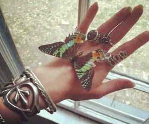 butterfly, hand, and rings image