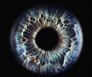 eye, iris, and photography image