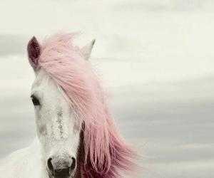 horse, white horse, and pink image