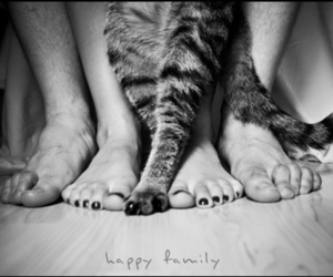 cat, family, and black and white image
