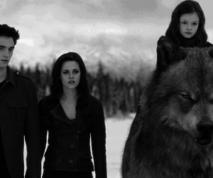 twilight, edward cullen, and jacob black image