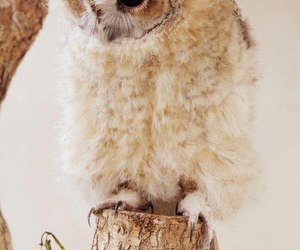 bird, cute, and owl image