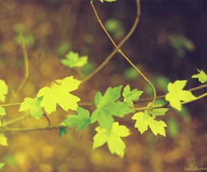 green, leaves, and yellow image
