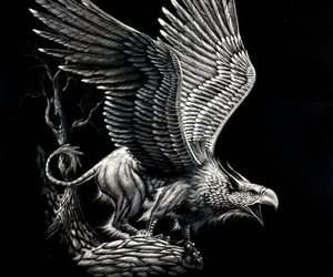 bird, griffin, and hawk image