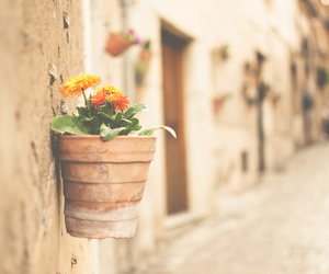 adorable, flowers, and naturaleza image