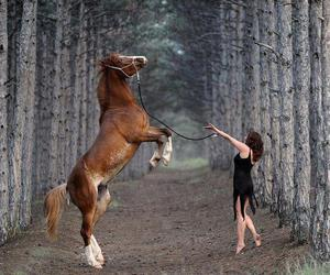 horse, animal, and forest image