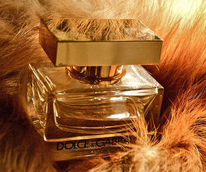 perfume, D&G, and luxury image