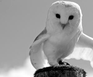 owl, photo, and photography image