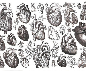 heart and scientific illustration image