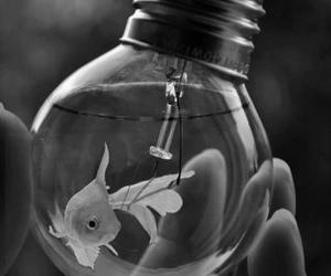 animals, black and white, and bulb image