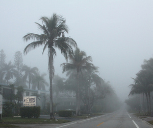 florida, rain, and tree image