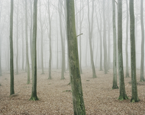 nature, tree trunks, and woods image
