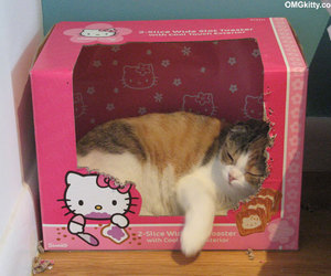 cat, cute, and hello kitty image