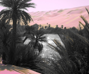 photography, pink, and nature image