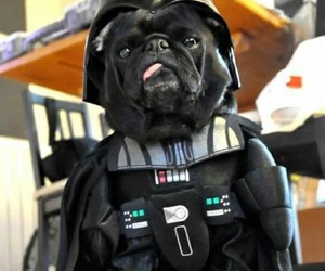 darth vader, dog, and funny image