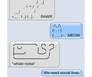 funny, text, and cat image