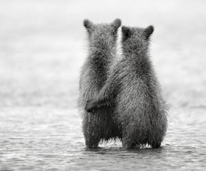 mother and daughter, cute bears, and lovely fluffy creatures image