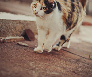 cat, pastel, and photography image