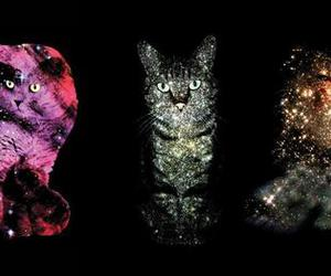 cat, kitty, and space image