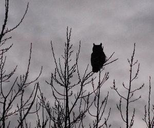 dark and owl image