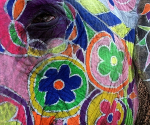 colorful, colors, and india image