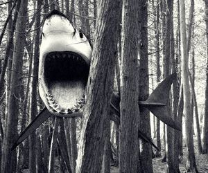 shark, forest, and black and white image