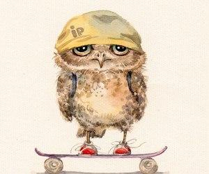 owl and skate image