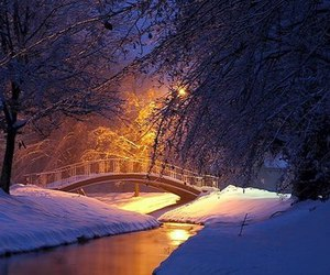 trees, bridge, and winter image