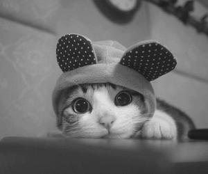 *-*, cat, and love image