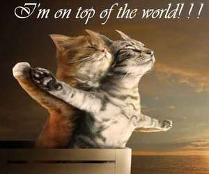 funny, kitten, and titanic image