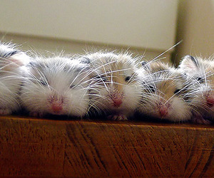 cute animals and hamsters image