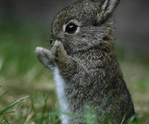 adorable, oh my goodness, and rabbit image