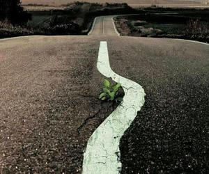 flower, road, and life image