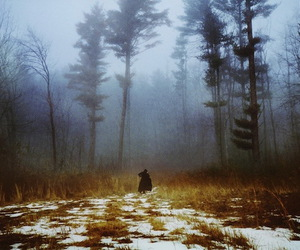 forest, photography, and fog image