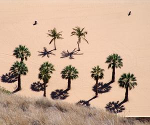palm trees and savethehero image