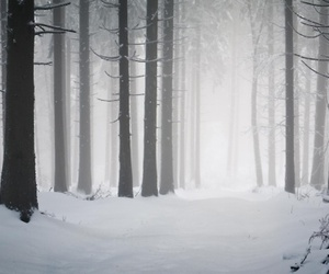 tree, snow, and winter image