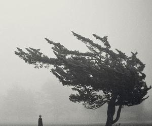 tree, black and white, and alone image