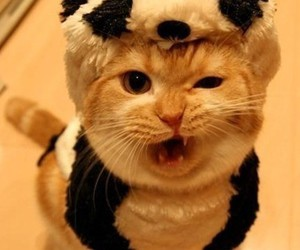 cat, panda, and animal image