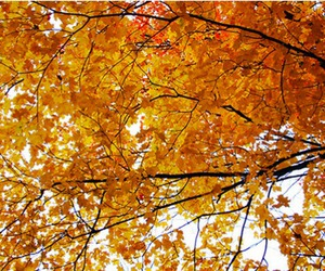 autumn, fall, and nh image