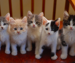 cat and kittens image