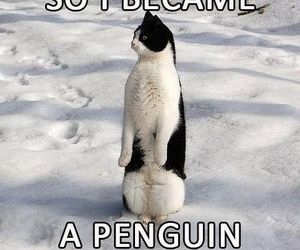 cat, penguin, and funny image