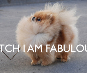 dog, fabulous, and bitch image