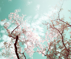 blossom, clouds, and sky image