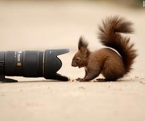 camera and squirrel image